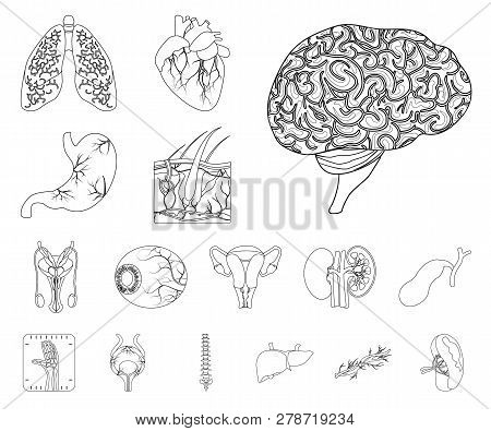 Vector Illustration Of Body And Human Icon. Set Of Body And Medical Stock Symbol For Web.
