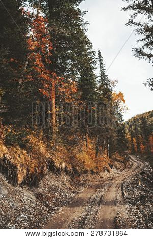A Vertical Colorful Wide-angle Shot Of The Autumn Wet Earthroad Next To The Hillside Overgrown With