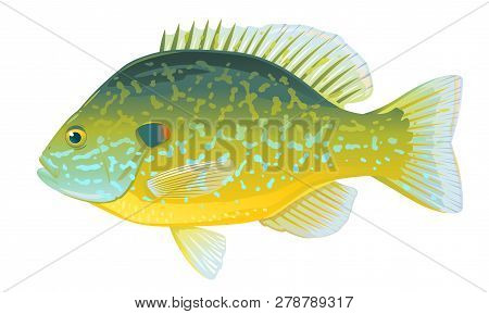 One Pumpkinseed Vector & Photo (Free Trial) | Bigstock