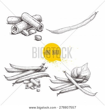 French Green Beans Pods Set. Collection Of Hand Drawn Sketches. Whole And Cut. Vector Illustrations