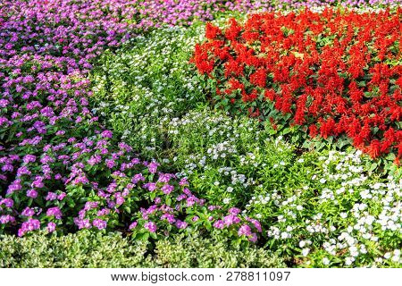 Blooming Flower In Park,colorful Flower In The Garden.