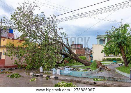 Santa Clara, Cuba, September 10, 2017: Trees Fallen To The Ground, Damage From Hurricane Irma As It