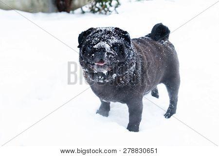 Cute Dog Pub Breed Black Funny Cute Winter Snow