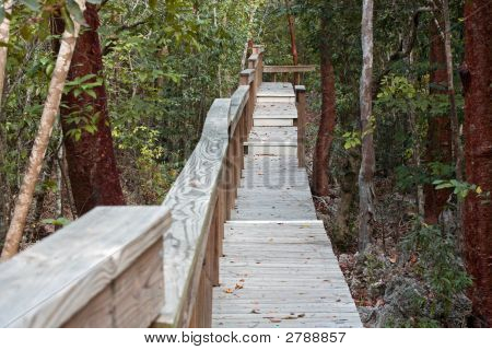 Walk Into The Parrot Preserve
