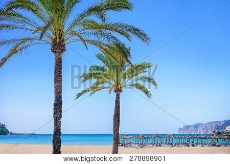Palm Trees With A Beach In The Background