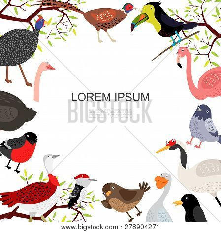 Flat Beautiful Birds Template With Peacock Ostrich Pheasant Flamingo Pigeon Crane Pelican Crow Sparr