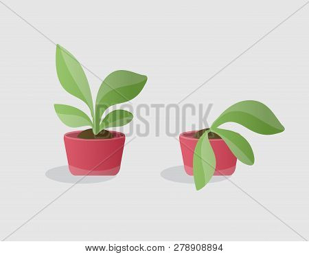 Opposite illustartion of living green plant and wilted plant in red pots. Isolated colorfulobjects in cartoon style for your design poster