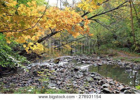 Fall Landscape With Yellow Branch Of Maple Tree