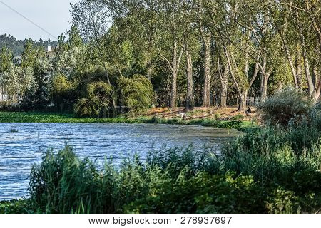 Albergaria/portugal - 10 08 2018; View A Man Fishing On Lake Of Pateira Fermentelos In Albergaria Ci