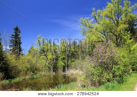 Autumn Landscape Forest With The Small Pond