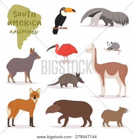 Animal In South America Vector Wild Animalistic Mammal Character Capybara Tapir Toucan In Southern W