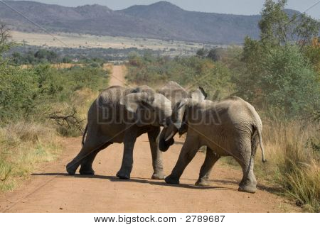 Elephant Battle Incl Clipping Path