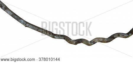 Close Up Wood Root. Spiral Twisted Jungle Tree Branch, Vine Liana Plant Isolated On White Background