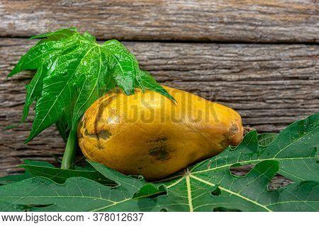 Papaya Formosa (carica Papaya). Natural Food. Papaya Fruit. Carica Papaya L. Is A Species Of Tropica