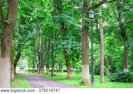 View Of The Street Lights And Trees In The Alley In The City Park. Concept Of Urban Street Lighting.