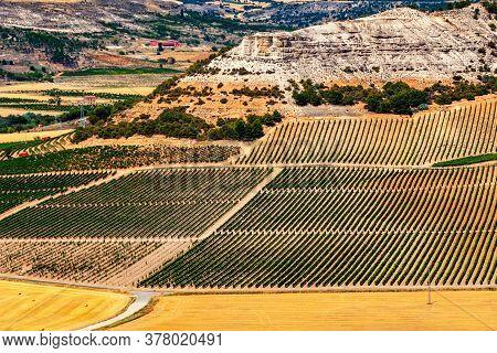 Grape Fields Of Valladolid Province Taken From Penafiel Castle, Spain