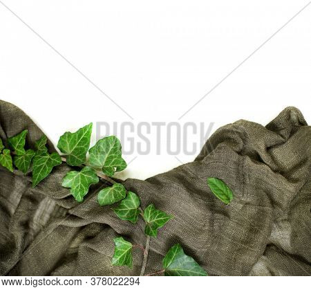 Ivy branches on green cloth and white background