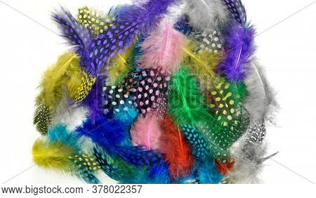 Colored feathers on a white background. Carnival