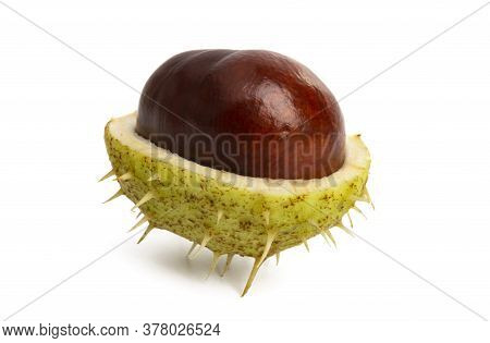 Chestnut Green Nutshel Isolated On White Background