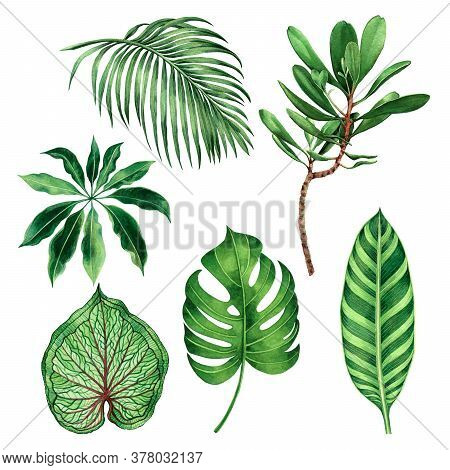 Watercolor Painting Set Monstera Coconut,palm Leaf,green Leaves Isolated On White Background.waterco