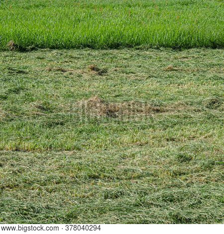 Pasture With Freshly Cut Green Grass For Pets