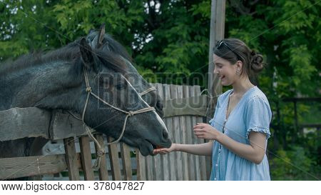 Young Smiling Woman Feeding Horses In Paddock Outdoors