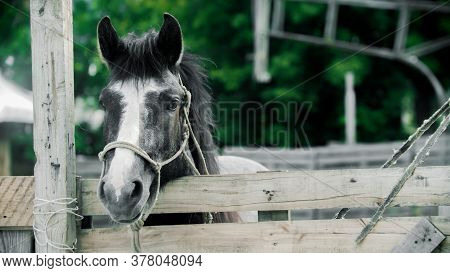 Little Horse Standing In The Paddock Outdoors