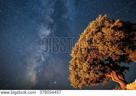 Big tree under a night sky full of stars. Milky way behind the illuminated tree at night
