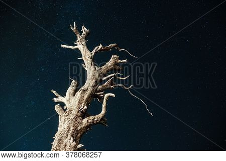 Dry tree trunk under a night sky full of stars. Infinite universe over the old tree.