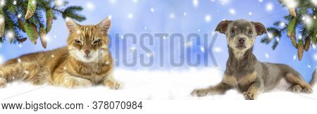 Red Cat Is Looking At The Camera. Pictures Of Cats, Cute Cat. Russian Cat On A White Snowy Backgroun