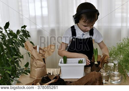The Boy Is Engaged In The Planting. Carefully Palms With Interest Unfolds The Wrapper Seedlings The