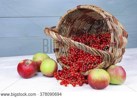Red Currant In Wicker Basket And Apples On A Wooden Background. Ripe Berries And Fruits. Ribes Rubru
