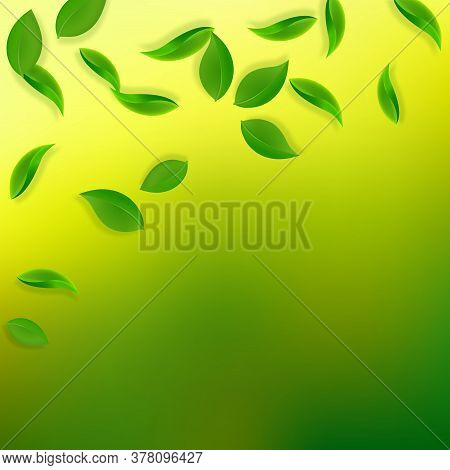 Falling Green Leaves. Fresh Tea Neat Leaves Flying. Spring Foliage Dancing On Yellow Green Backgroun
