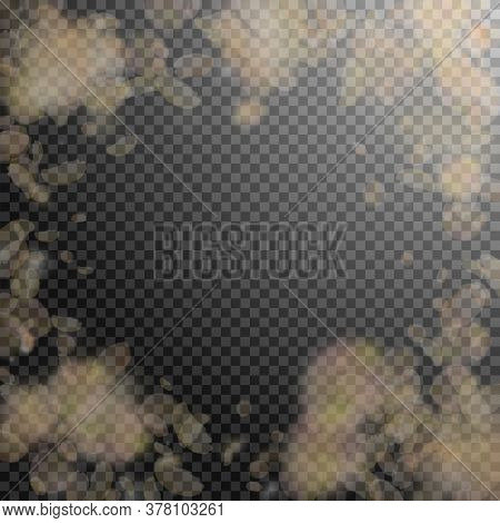 Yellow Orange Flower Petals Falling Down. Likable Romantic Flowers Vignette. Flying Petal On Transpa