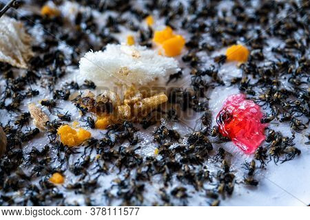 The Close Up Of Many Fly Dead On Fly Glue Trap, Dead Flies Trapped On A Glue Trap, Fly Are The Cause