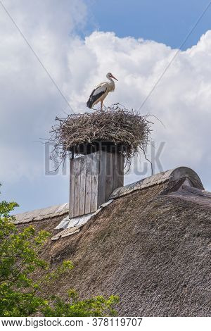 Stork Alone On His Nest On The Thatch Roof Of A House