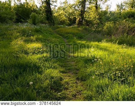 A Hiking Trail Through A Field Overgrown With Grass And Wildflowers Towards The Woods During A Sunny
