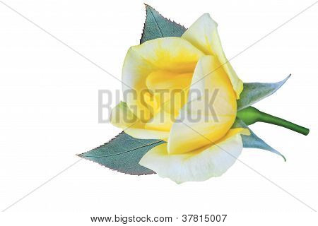 Bud Of Yellow Rose Isolated On White