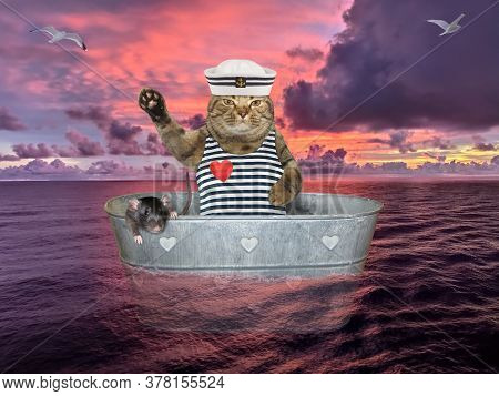 The Beige Cat In A Seaman Clothing With A His Black Rat Is Drifting In A Metal Oval Washtub On The O