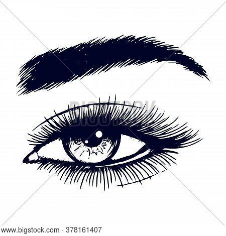 Beautiful Lady Eye Hand Drawn Vector Illustration. Closeup Woman Mascara Makeup Sketch Isolated On W