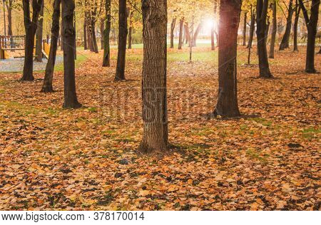 Yellow Fallen Leaves And Trees In The Autumn Park, Sunlight And Glare