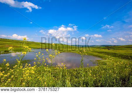 Canola Flowers.colza Around The Pond. Rape.  A Fabulous Sky And Clouds