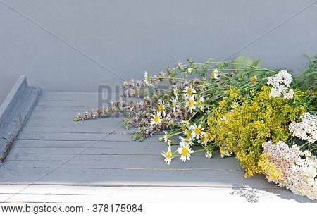 Healing Herbs On A Grey Wooden Table. Chamomile And Mint, Milfoil Or Yarrow As Alternative Medicine