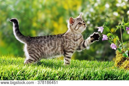 Cat Looking Away On Grassy Field. Cat in nature