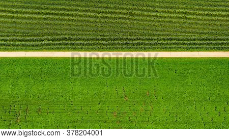 Aerial Top View At Path Between Fields Of Maize And Soy Plant. Rural Landscape In Austria.