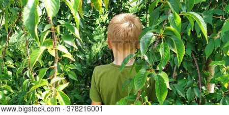 The Boy Pisses In The Bushes. A Child In A Green T-shirt On A Background Of Green Bushes. Directing