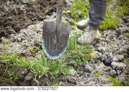 The Shovel Is Stuck In The Ground. Digging Up Soil. Gardening Tools In The Garden.