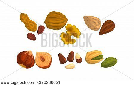 Different Kind Of Nuts Set, Peanut, Walnut, Almond, Hazelnut, Pistachio Cartoon Style Vector Illustr