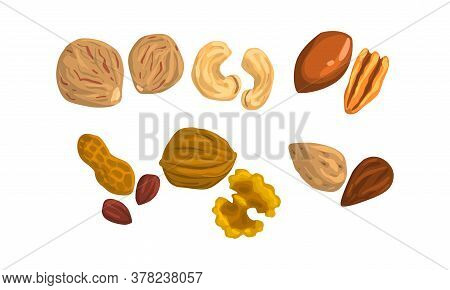 Different Kind Of Nuts Set, Cashew, Pecan, Nutmeg, Peanut, Walnut, Almond Cartoon Style Vector Illus