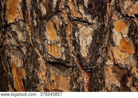 The Relief Texture Of The Brown Bark Of The Tree In Outgrowths And Cracks Close-up As A Background.